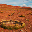 Altiplano plateau — Stock Photo #16360321