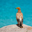 Seascape with bird, ArabiSea — Stock Photo #17654191
