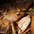 Frog in a jungle - Stock Photo