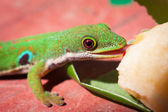 Lizard eats babana — Stock Photo