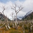 Dead trees on Mount Fitz Roy in Patagonia — Stock Photo #17677271