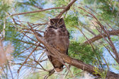 Owl sitting on a bough — Stock Photo