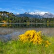 Stock Photo: Spring in Patagonia, Argentina