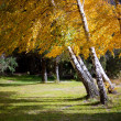 Fall Foliage on trees - Stock Photo