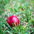Red apple on green grass — Foto de stock #17691029