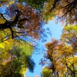 Fall Foliage on trees — Stock Photo #17692451