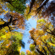 Fall Foliage on trees — Stock Photo #17692565