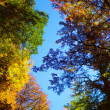 Fall Foliage on trees — Stock Photo