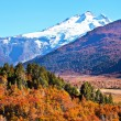 Stock Photo: Autumn in Patagonia