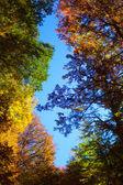 Fall Foliage on trees — Stock Photo