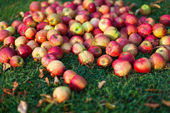 Apples on the grass — Stok fotoğraf
