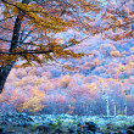 Autumn trees — Stock Photo #17701075