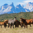 Wild horses in the National Park — Stock Photo