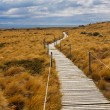 Stock Photo: Wooden walkway in Patagonia