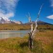 The National Park Torres del Paine — Stock Photo #17816887