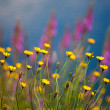 Stock Photo: Wildflowers in Chile, Patagonia