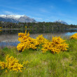 Stock Photo: Spring in Patagonia
