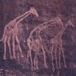 Petroglyphs in Sahara desert - Stock Photo