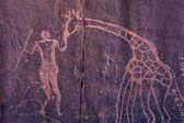 Petroglyphs in Sahara desert — Stock Photo