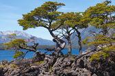 National park Lanin, lake Huechulafquen — Stock Photo