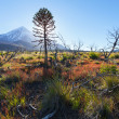 Stock Photo: VulcLanin, National park Lanin