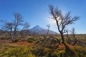 瓦肯星 lanin,国家公园 lanin — 图库照片