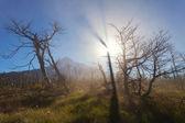 Vulcan Lanin, National park Lanin — Stock Photo