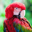 Colorful parrot bird - Stock Photo