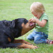 Сhild playing with a dog — Stock Photo