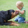 Stock Photo: Сhild playing with dog