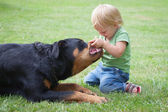 Сhild playing with a dog — ストック写真