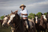 Gauchos en Fiesta de la Tradicion in San Antonio de Areco — Stock Photo
