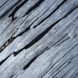 Texture of the old dry wood — Stock Photo