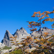 Autumn in the Mountains, Mount Lopez, Patagonia — Stock Photo