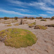 Rock formations in a national park Ischigualasto — Stock Photo