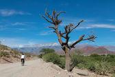 Horská obec cachi, argentina — Stock fotografie