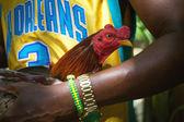 Cockfights in Cuba — Stock Photo
