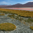 Laguna Colorada — Stock Photo