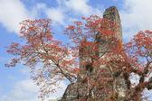 Mayan pyramid in Tikal, Guatemala — Stock Photo