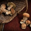 Mushrooms and basket — Zdjęcie stockowe