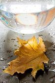 Yellow autumn leaf on wet — Stock Photo