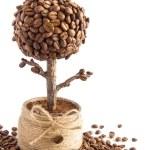 Handmade coffee tree — Stock Photo