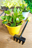 Young plants and garden tools — Stock Photo