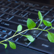 Stock Photo: Green plant on keyboard