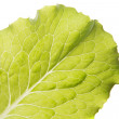 Green lettuce leaf — Stock Photo