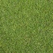 Grass on golf course putting  green — Photo