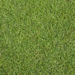 Grass on golf course putting  green — 图库照片