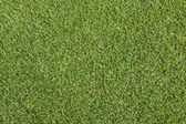 Grass on golf course putting green — Stock Photo