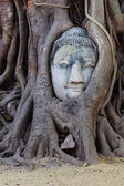 Head of sandstone buddha in tree root at wat mahathat temple, Ay — Stock Photo
