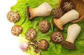 Mushrooms and a wooden bowl of — Foto de Stock